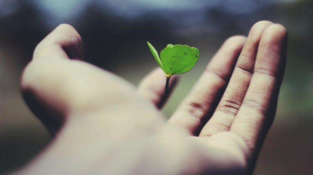 手に葉っぱが生えている