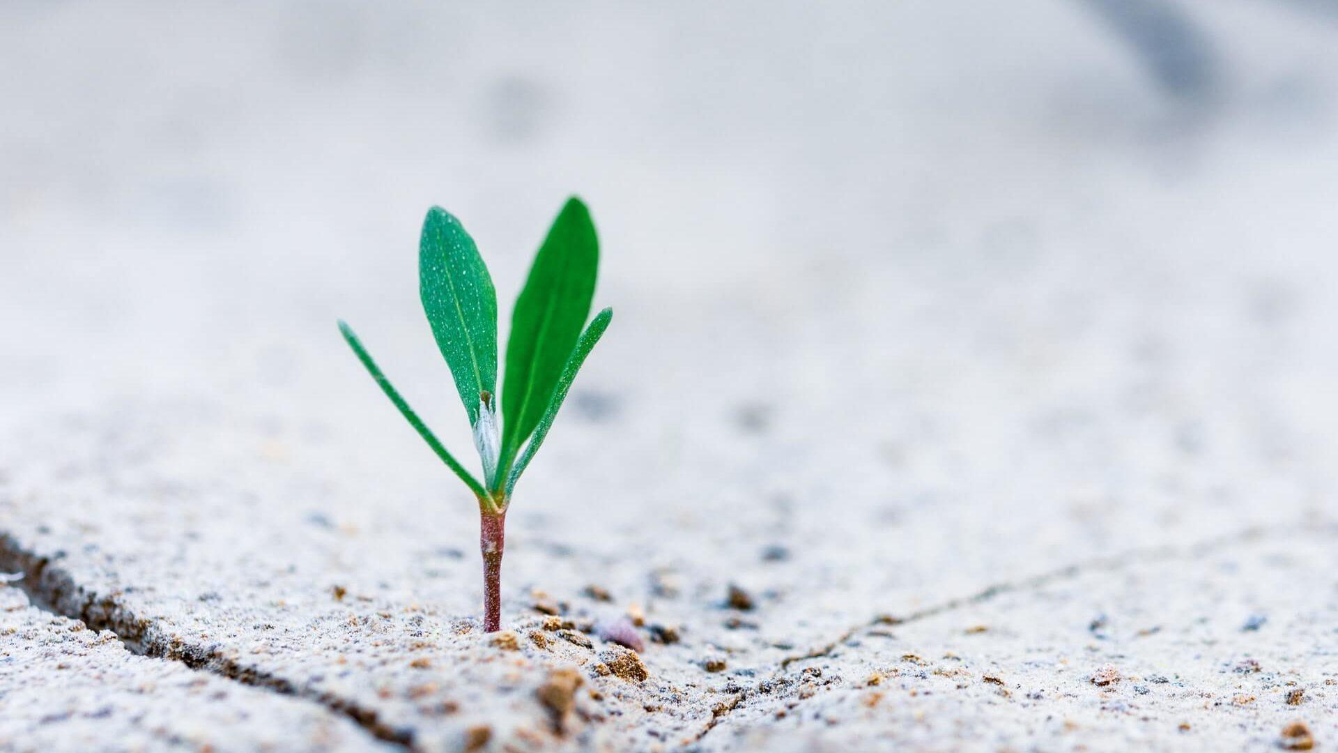 地面から葉っぱが生えている